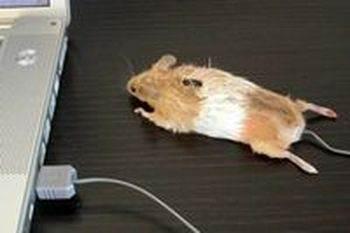Как помыть коврик для мыши и саму мышку