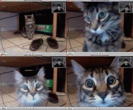 настройка видео в скайпе - не сложный процесс