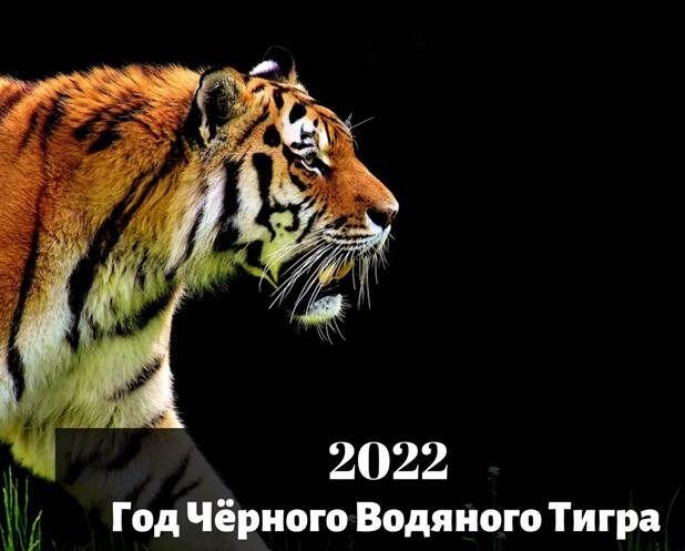 2022 год тигра